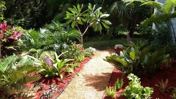 Tropical plants and a gravel path create a beautiful view from the large picture window.  Verawood tree will also provide shade from the hot afternoon sun.