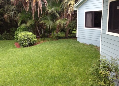 Tropical Landscape Design - BEFORE Picture