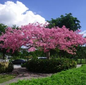 Pink Floss Silk